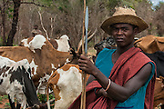 Mahafaly herder (Those-who-make-taboos). Near Ampanihy, south-west coast of MADAGASCAR<br /> The Mahafaly probably arrived to Madagascar around the 12th centurey from Africa and live in the sw desert areas around Ampanihy and Ejida. They are farmers, with maize, sorgho and sweet potoatoes as their main crops and cattle rearing occupies a secondary place. They kept their independence under their own chiefs until French occupation and still keep the bones of some of their old chiefs - this is the 'Jiny' cult. The villages usually have a sacrificial post, the 'hazo mango' on their east side where sacifices are made. Their large rectangular stone tombs which are decorated with wooden carvings 'aloalo' and the horns of all the zebu slain at the funereal are very eleborate.
