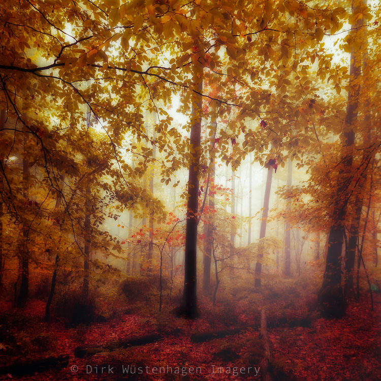 Dreamy forest undergrowth in backlight on a misty and rainy fall day.