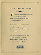 Frigate Bird verse from 'Birds on the wing' by Giacomelli [Hector Giacomelli (April 1, 1822 in Paris – December 1, 1904 in Menton), was a French watercolorist, engraver and illustrator, best known for his paintings of birds.] Published in London by Thomas Nelson & Sons 1878. The book contains Hand-colored plates with accompanying text in verse