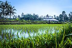 Murni's Bali Tours 5