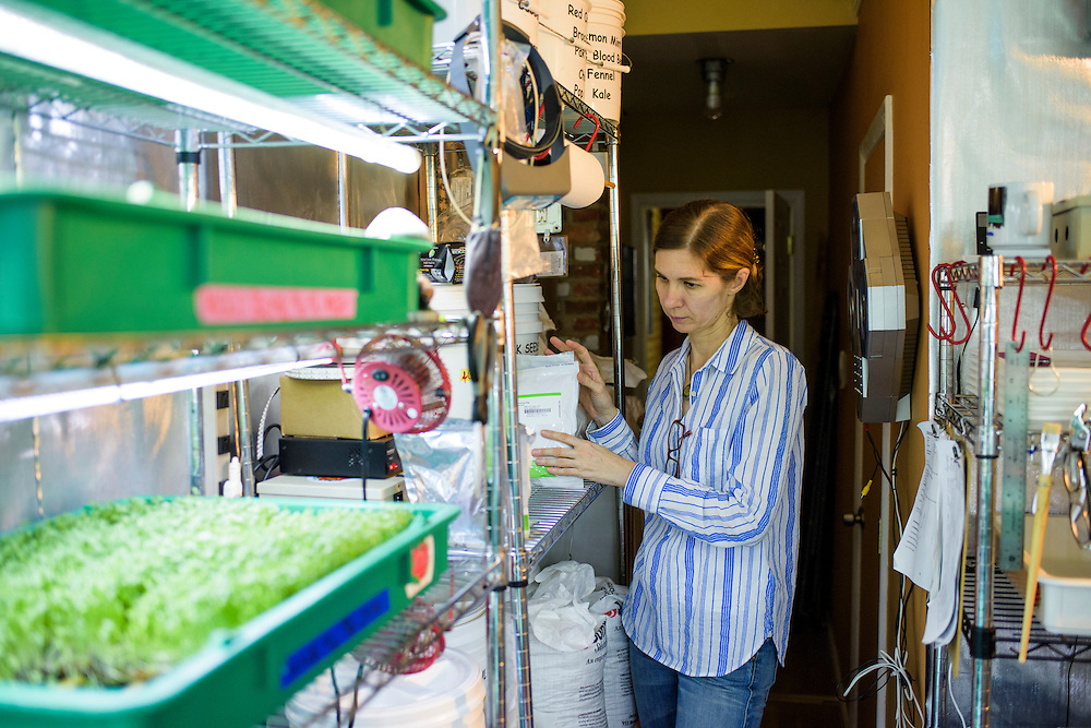 """Baltimore, Maryland - June 23, 2016:<br /> City-Hydro owners Zhanna Hount and her husband Larry started growing microgreens in a spare room in their Baltimore rowhome a year and a half ago. Since then, their vertical farm has earned them $120k a year. They sell their crop directly to local restaurants, but, """"What we want to be at the end of the game is a supplier..."""" says Larry. The couple sell their custom made racks, which use daylight balanced LED lights and offer training. <br /> <br /> <br /> CREDIT: Matt Roth for The New York Times<br /> Assignment ID: 30191904A"""