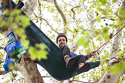 London, UK. 23rd April 2019. A climate change activist from Extinction Rebellion sits in a hammock strung between the upper branches of a tall tree high above Parliament Square.