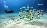 Common Reef Fish in Cozumel, Mexico