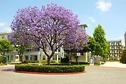 Student Housing on Campus at California State University Fullerton
