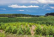 Pojezierze Kaszubskie (woj. pomorskie) 2015-08-18. Krajobraz w okolicy wsi letniskowej Łubiana położonej w powiecie kościerskim nad jeziorem Sudomie.