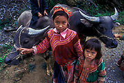 Hmong children herd their water buffalos near Sa Pa