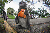 Urban Wildlife Kuala Lumpur Malaysia