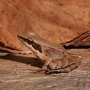 Palawan - Reptiles and Amphibians