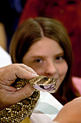 A young girl looks at a western diamondback rattler during the 51st Annual Sweetwater Texas Rattlesnake Round-Up March 13, 2009 in Sweetwater, Texas. During the three-day event approximately 240,000 pounds of rattlesnake will be collected, milked and served to support charity.