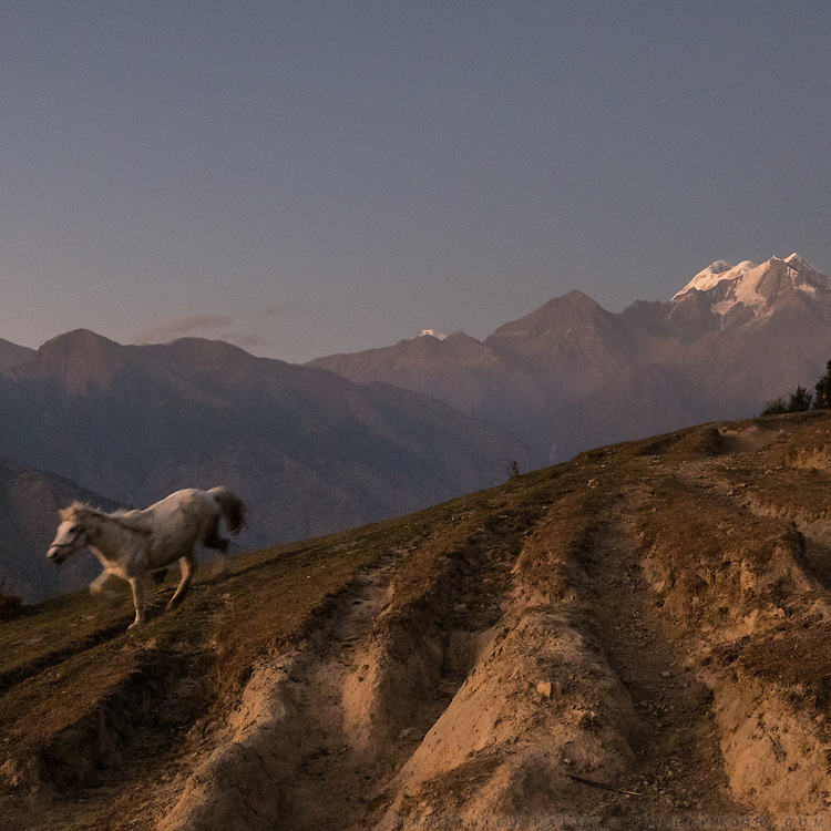 A white horse running below Nanda Devi, the highest mountain located entirely within the country. In the Himalaya.