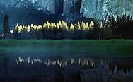 Morning light highlights pine trees at the baser of El Capitan in Yosemite National Park.  May, 1998.