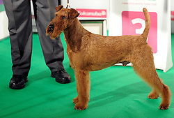 © Licensed to London News Pictures. 11/03/2012. Irish Terrier, Feelt St Fenway Fan with owner Mr V Barker after being place thrid in the Terrier Group final at the 2012 Crufts final at the Birmingham NEC Arena.   Photo credit: Alison Baskerville/LNP