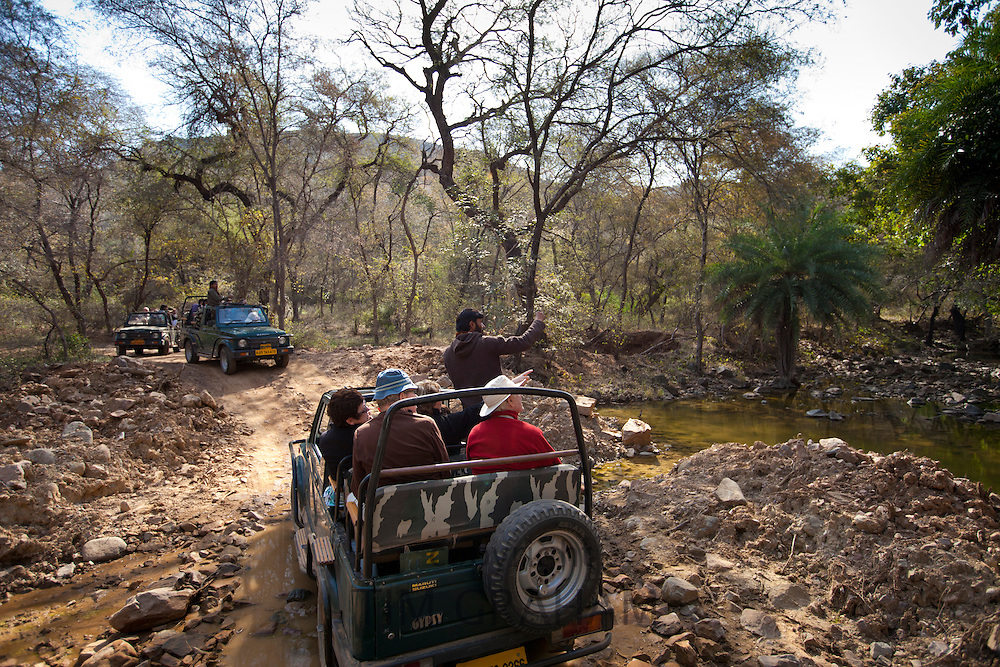 Tour groups of eco-tourists in Maruti Suzuki Gypsy King 4x4 vehicle at waterhole in Ranthambhore National Park, Rajasthan, India