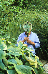 Alan Titchmarsh examining a hosta leaf that has been riddled with holes by slugs and snails.