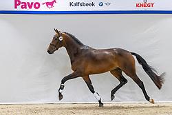 305, Nasdaq<br /> KWPN Hengstenkeuring 2021<br /> © Hippo Foto - Dirk Caremans<br />  04/02/2021