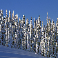 Snow covered trees called snow ghosts at The Big Mountain ski area.