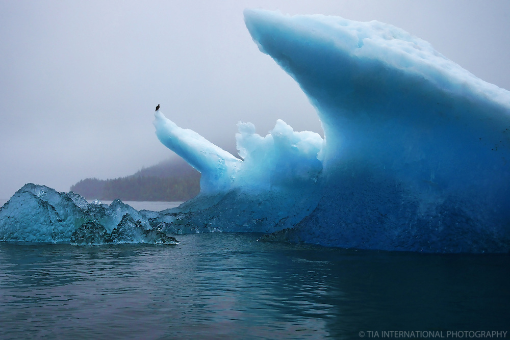 Gigantic Iceberg, Tracy Arm Fjord, Alaska