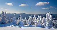 Snow encrusted spruce trees on top of Hunger Mountain in winter, Vermont