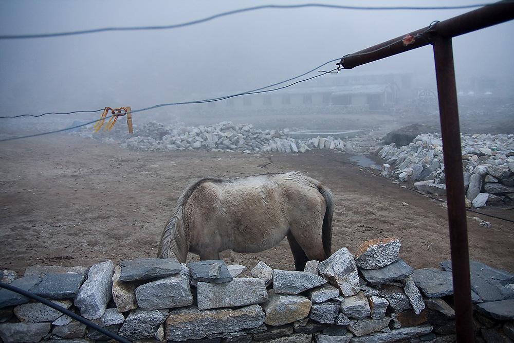 Pack horse in the mist, Lobuche, Khumbu (Everest) region, Sagarmatha National Park, Himalaya Mountains, Nepal.