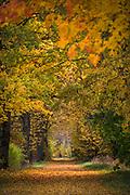 Autumn colors in old maple and oak alley along rarely used road, near Glāzšķūnis, Lavia Ⓒ Davis Ulands | davisulands.com