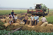 PEASANT FARMING, Malaysia. Combine harvester. Peasant farmers  and children sit on rice sacks.  Kedah state. World Bank funded  project. Poor farmers, peasants, planting, harvesting, cultivating rice padi.