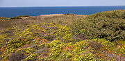 Vegetation Rota Vicentina Fishermen's Trail long distance coast path, Odeciexe, Algarve, Portugal