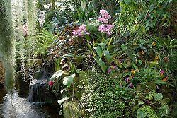 The orchid display at McBean's Orchids