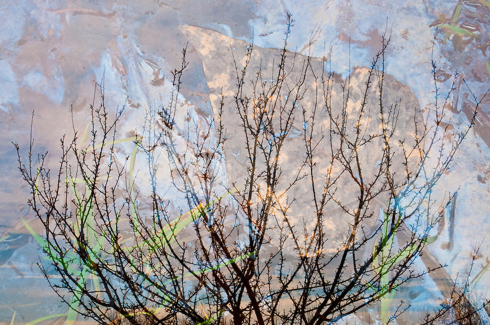 A multiple exposure of oily water and tree branches at the University of Washington's Union Bay Natural Area in Seattle.