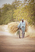 A man transports reeds on his bicycle near the entrance to  Waza National Park, in the north of Cameroon
