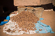 Large amounts of dried dates on sale at the open-air market in Tagounite, southern Morocco.