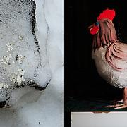 ice /  chicken in the ceramics museum of Resen