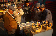 Bird fanciers admires caged tropical birds in the Grand Place (Grote Markt, in Flemish) bird market, Brussels, Belgium. The archetypal Belgian gentlemen wear flat caps and in the cages are small birds from tropical countries, on sale every Sunday for those wanting avian company in their homes. The Brussels Grand Place hosts a bird market and the selection and prices are generally better than can be found in pet shops though the origins of these creatures are questionable. The Grand Place is Brussels' main city square, the focal point for colourful events throughout the year. Its Dutch-styled gabled guildhalls date from the 13th century and is now a UNESCO World Heritage Site.
