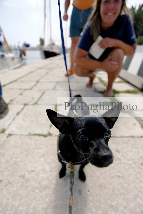 Un minuscolo cane mostrato con orgoglio dal suo padrone. Il cane cerca, incuriosito, di annusare lo strano oggetto che lo inquadra; il tutto si svolge sotto gli occhi divertiti della gente che cerca di godersi la mattinata al porto di Brindisi sotto un sole cocente di fine maggio.