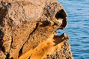 Face in rock, Point Lobos State Reserve, California
