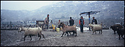 Goats march down the road as children fetch water from a pump that an NGO had installed near a graveyard in Kabul.