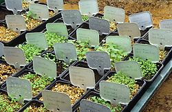 Germinating seeds and aluminium plant labels
