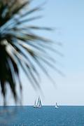 Gylly Beach sail and palms 02