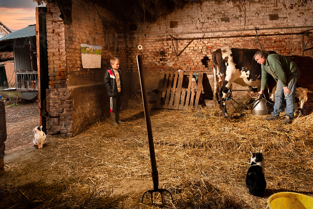 Régis et son fils lors de la traite quotidienne des vaches.<br /> Régis and his son during the daily milking of cows