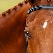 Nutrena Equine