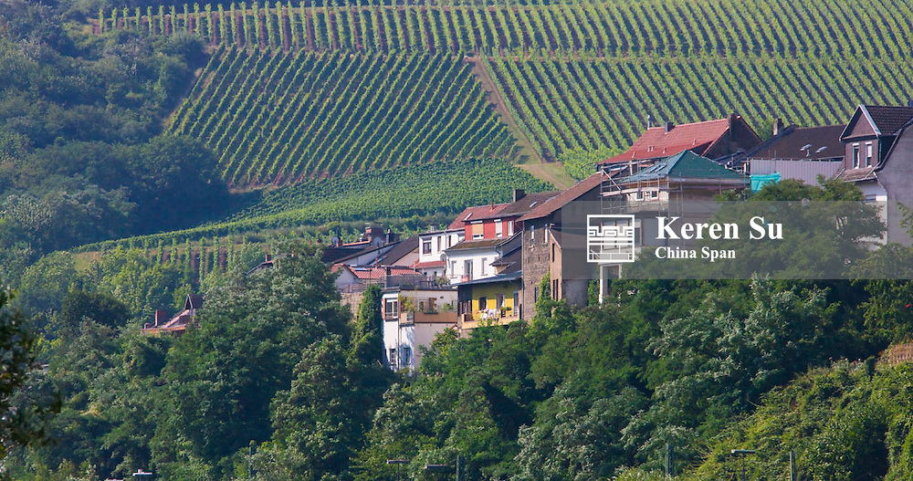 Vineyard and houses on mountain slope along river Rhine, Upper Middle Rhine Valley (UNESCO World Heritage site),Rudesheim, Germany