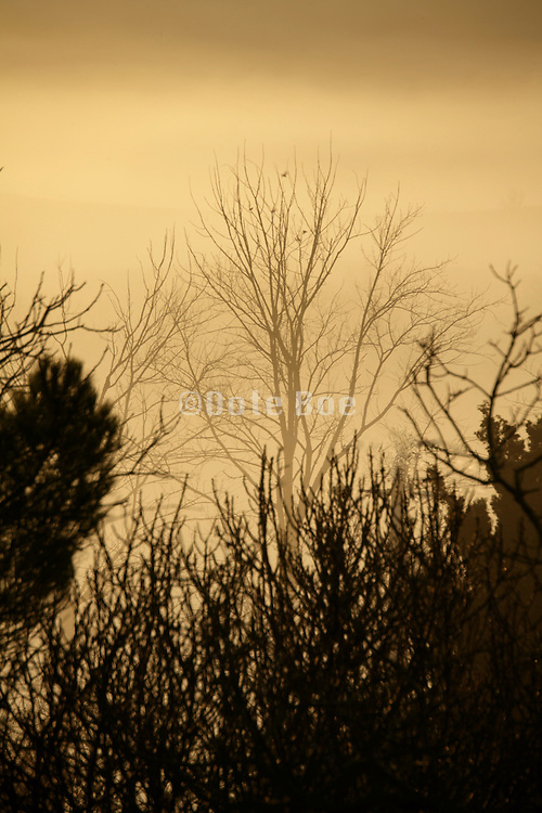 fog seen through the top of trees