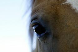 Ranke (Prince Royal x Lys de Darmen)<br /> Photo © Dirk Caremans