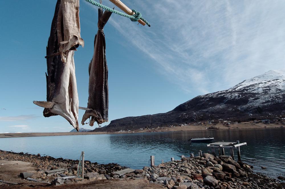 Hengt tørrfisk - Fish hung for drying