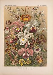 Kunstformen der Natur<br /> Leipzig und Wien :Verlag des Bibliographischen Instituts,1899-1904.<br /> https://biodiversitylibrary.org/page/47388355