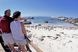 Observing African Penguins