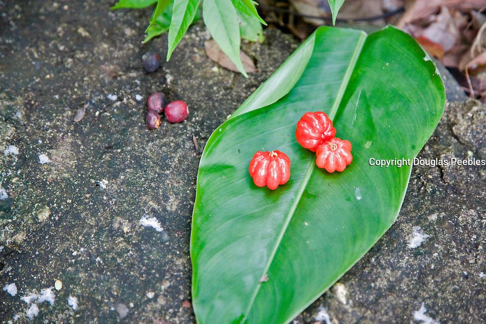 Vaipaee Community Botanical Garden, Ua Huka, Marquesas Islands, French Polynesia<br />