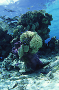 Coral, French Polynesia<br />