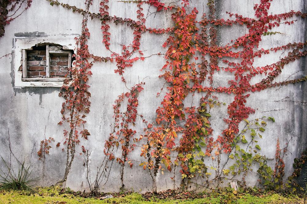 St. Charles, Lee County, Virginia 20.10.09