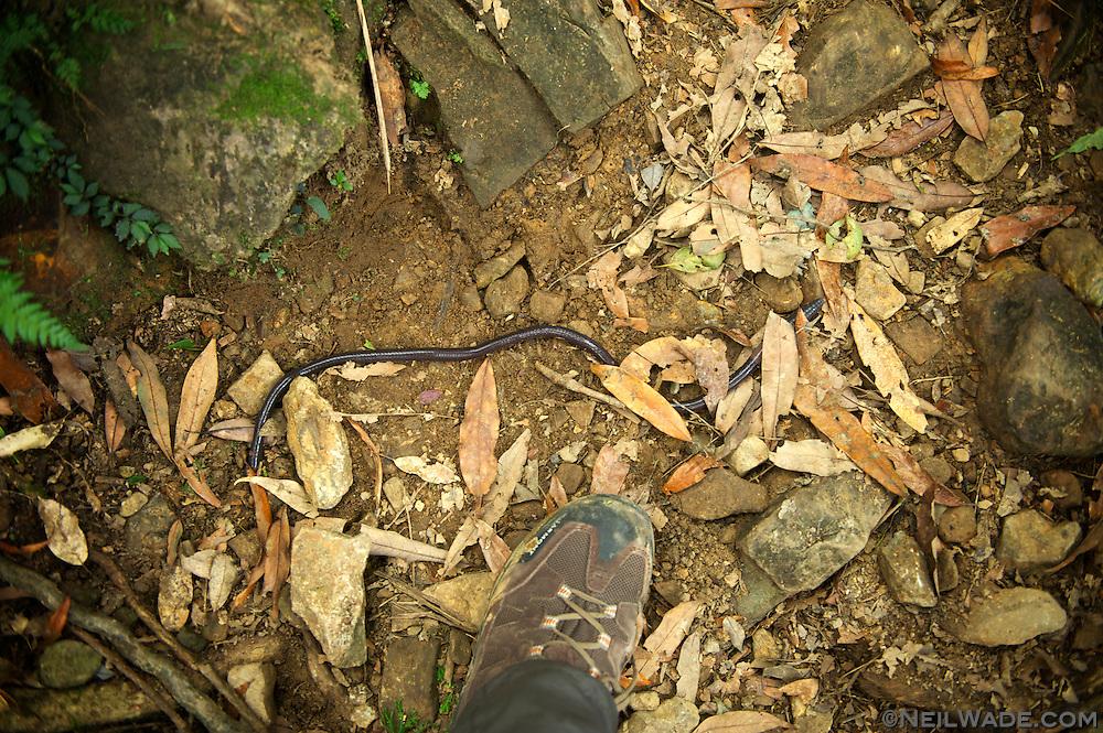 My boot is a US size 11, so that's about a 24 inch (60cm) worm.