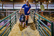 21 JULY 2020 - COLFAX, IOWA: A girl takes her hogs to the washing area before the swine show at the Jasper County Fair in Colfax, about 30 miles east of Des Moines. Summer is county fair season in Iowa. Most of Iowa's 99 counties host their county fairs before the Iowa State Fair. In 2020, because of the COVID-19 (Coronavirus) pandemic, many county fairs were cancelled, or scaled back to concentrate on 4H livestock judging. The Iowa State Fair was cancelled completely. The Jasper County Fair cancelled most events and focused on just the 4H contests. Tuesday were the swine contests.          PHOTO BY JACK KURTZ